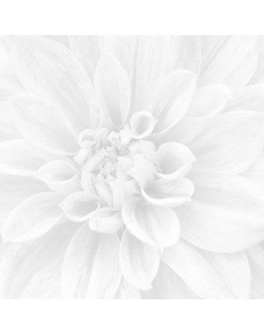 Crisantemo Панно из 3-х шт 60х60