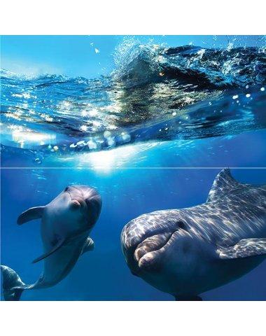 Dolphins Панно 50x50