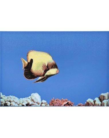MONO FISH 1 Декор 27,5х40